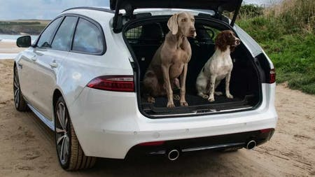 Let Your Dog In On The Action With Jaguar Gear Accessories